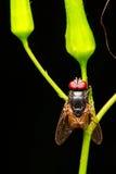 Έντομο στο φύλλο Στοκ Εικόνες