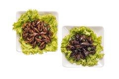 Έντομο τροφίμων Στοκ φωτογραφίες με δικαίωμα ελεύθερης χρήσης