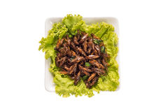 Έντομο τροφίμων Στοκ Εικόνα