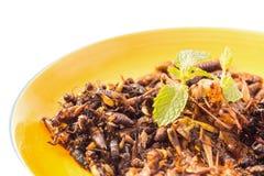 Έντομο τροφίμων Στοκ εικόνα με δικαίωμα ελεύθερης χρήσης
