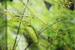 Έντομο φύλλων στοκ φωτογραφία
