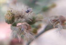 έντομο Στοκ φωτογραφίες με δικαίωμα ελεύθερης χρήσης