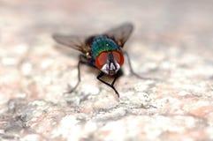 έντομο στοκ εικόνες