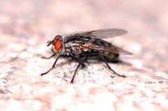 έντομο στοκ εικόνα