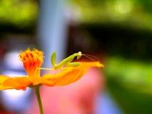 έντομο 5 λουλουδιών στοκ φωτογραφία