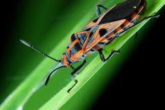 έντομο στοκ φωτογραφία