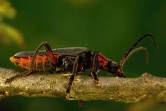 έντομο Στοκ εικόνες με δικαίωμα ελεύθερης χρήσης