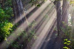 Έντονες ακτίνες ήλιων μέσω του παλαιού δάσους αύξησης, Π.Χ., Καναδάς Στοκ εικόνα με δικαίωμα ελεύθερης χρήσης