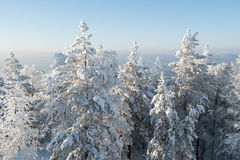 δέντρα ισχυρής χιονόπτωση&sigm Στοκ Φωτογραφίες