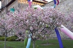 Δέντρα κερασιών στην άνθιση Στοκ Φωτογραφία
