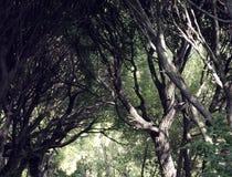 δέντρα κλάδων Στοκ εικόνα με δικαίωμα ελεύθερης χρήσης