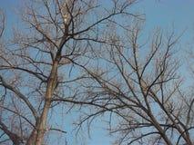 δέντρα κλάδων στοκ φωτογραφίες με δικαίωμα ελεύθερης χρήσης