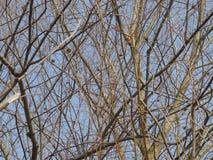 δέντρα κλάδων Στοκ εικόνες με δικαίωμα ελεύθερης χρήσης