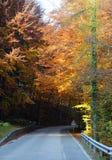 δέντρα με τα ζωηρόχρωμα φύλλα το φθινόπωρο στα βουνά Στοκ φωτογραφία με δικαίωμα ελεύθερης χρήσης