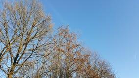 δέντρα μπλε ουρανού φθιν&omicro Στοκ Εικόνες