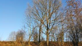 δέντρα μπλε ουρανού φθιν&omicro Στοκ Εικόνα