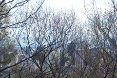 δέντρα μπλε ουρανού Στοκ εικόνα με δικαίωμα ελεύθερης χρήσης