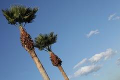 δέντρα ουρανού φοινικών Στοκ Φωτογραφίες