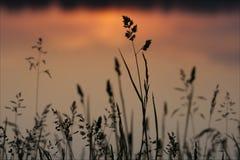 δέντρα σκιαγραφιών πρωινού τοπίων σπιτιών ομίχλης στοκ φωτογραφίες