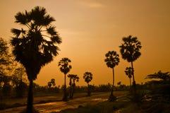 δέντρα σκιαγραφιών φοινικών Στοκ Φωτογραφία