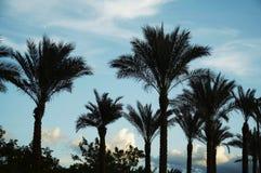 δέντρα σκιαγραφιών φοινικών Στοκ φωτογραφίες με δικαίωμα ελεύθερης χρήσης