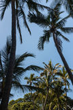 δέντρα σκιαγραφιών φοινικών Στοκ εικόνα με δικαίωμα ελεύθερης χρήσης