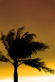 δέντρα σκιαγραφιών φοινικ Στοκ Εικόνες