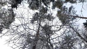 Δέντρα στο χιόνι το χειμώνα απόθεμα βίντεο