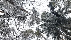 Δέντρα στο χιόνι το χειμώνα φιλμ μικρού μήκους