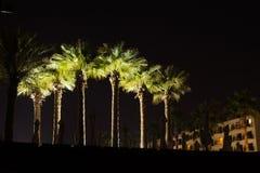 δέντρα της Ισπανίας φοινικών νύχτας νησιών fuerteventura καναρινιών Στοκ εικόνα με δικαίωμα ελεύθερης χρήσης
