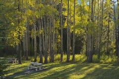 Δέντρα της Aspen και πίνακες πικ-νίκ το φθινόπωρο Στοκ Φωτογραφίες