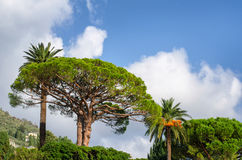 δέντρα τροπικά Στοκ Φωτογραφία