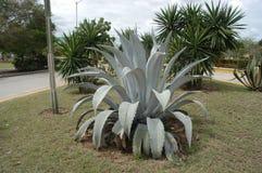 δέντρα φυτών στοκ φωτογραφία με δικαίωμα ελεύθερης χρήσης