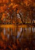 δέντρα φύλλων Στοκ φωτογραφίες με δικαίωμα ελεύθερης χρήσης