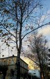 δέντρα φύλλων Στοκ εικόνα με δικαίωμα ελεύθερης χρήσης
