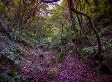 δέντρα φύλλων Στοκ φωτογραφία με δικαίωμα ελεύθερης χρήσης