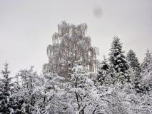 δέντρα χιονιού κάτω Στοκ φωτογραφίες με δικαίωμα ελεύθερης χρήσης