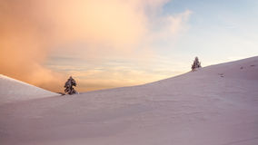 δέντρα δύο Στοκ φωτογραφία με δικαίωμα ελεύθερης χρήσης