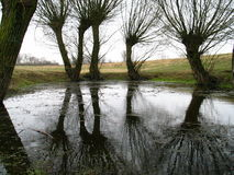 δέντρα Στοκ Φωτογραφίες
