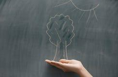 δέντρο ήλιων κάτω Στοκ Εικόνες