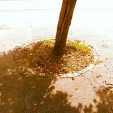 δέντρο αστικό Στοκ Φωτογραφίες