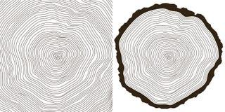 δέντρο δαχτυλιδιών Στοκ Φωτογραφία