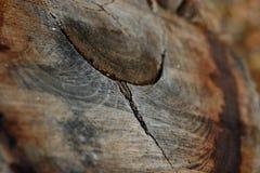 δέντρο δαχτυλιδιών Στοκ φωτογραφία με δικαίωμα ελεύθερης χρήσης