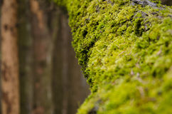δέντρο βρύου χρώματος κίτρινο Στοκ Εικόνες
