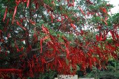 δέντρο επιθυμιών Στοκ εικόνες με δικαίωμα ελεύθερης χρήσης