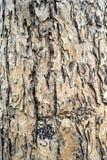 δέντρο λεπτομέρειας Στοκ εικόνες με δικαίωμα ελεύθερης χρήσης