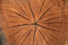δέντρο λεπτομέρειας Στοκ εικόνα με δικαίωμα ελεύθερης χρήσης