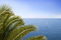 δέντρο θάλασσας φοινικών Στοκ εικόνα με δικαίωμα ελεύθερης χρήσης