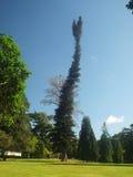 δέντρο κήπων Στοκ φωτογραφίες με δικαίωμα ελεύθερης χρήσης