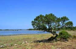 Δέντρο και λίμνη Στοκ φωτογραφία με δικαίωμα ελεύθερης χρήσης